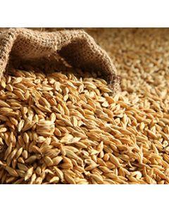 Barley (Jau) 100G
